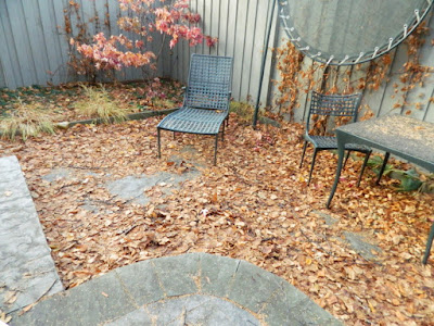 Toronto Cabbagetown Backyard Fall Cleanup Before by Paul Jung Gardening Services--a Toronto Gardening Services Company
