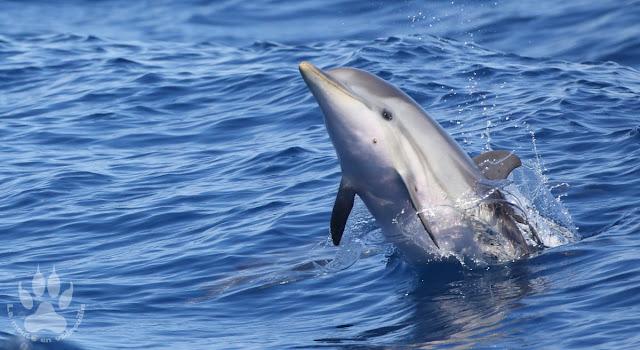 France-PACA-Var-Sanary-sur-mer-dauphin-bleu-blanc
