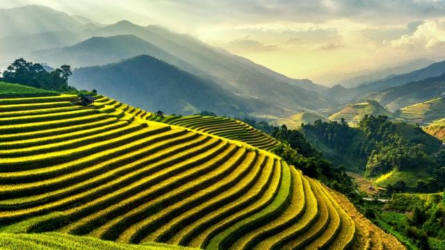 foto pemandangan sawah keren di indonesia