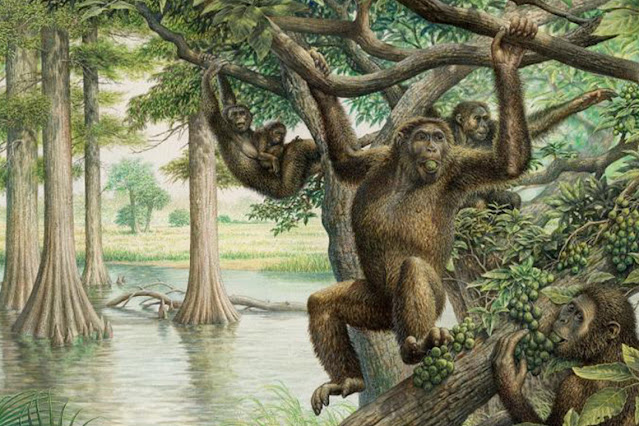 Researchers find link between apes in Africa and 10-million-year-old ape fossils in Hungary, Spain