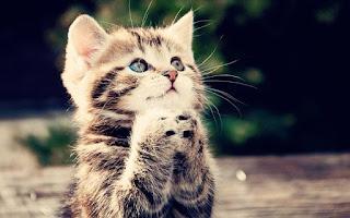 kucing kesayangan rasulullah saw