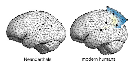 Study compares the parietal lobes in Neanderthals and modern humans