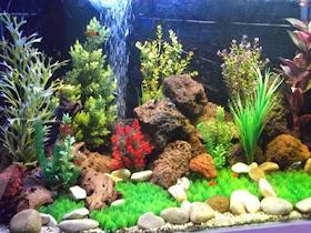 arti mimpi akuarium, mimpi aquarium, mimpi aquarium pecah, mimpi ikan dalam aquarium, mimpi ikan di aquarium, mimpi melihat ikan di aquarium, mimpi aquarium