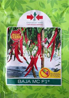 racun hama cabe, insektisida kontak, buldok 25 EC, bayer, pestisida, toko pertanian, toko online, lmga agro