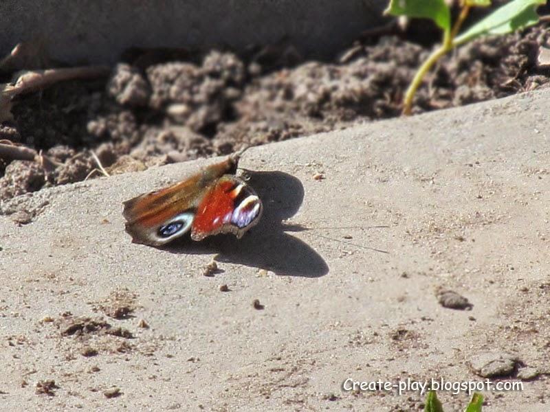 бабочка сушит крылья весной
