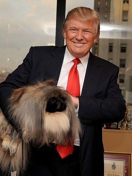 Terrierman's Daily Dose: Donald Trump and the Westminster Dogs