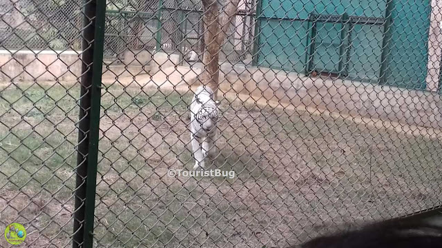 Lucknow Zoo animals photos