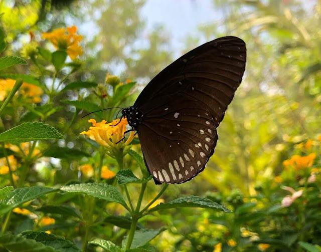 Bai Orchid and Butterfly Farm - BORBOLETAS