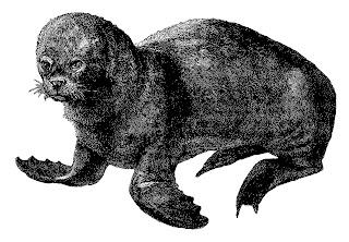 sea lion image antique illustration digital download