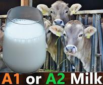 A1 vs. A2 milk