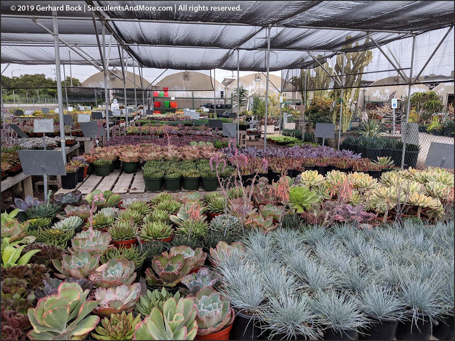 Checking Out Oc Succulents Irvine Ca