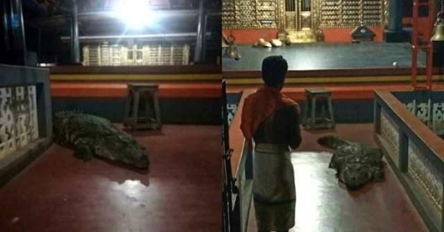 కేరళ: గుడిలోకొచ్చిన మొసలి – పూజారి ప్రార్థనతో తిరిగి సరస్సులోకి - Crocodile makes surprise entry into Kerala temple, retreats after request from priest