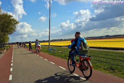 campi tulipani bicicletta olanda