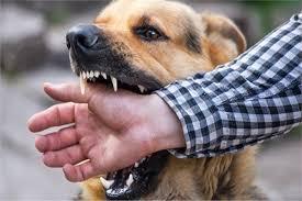 عضة كلب