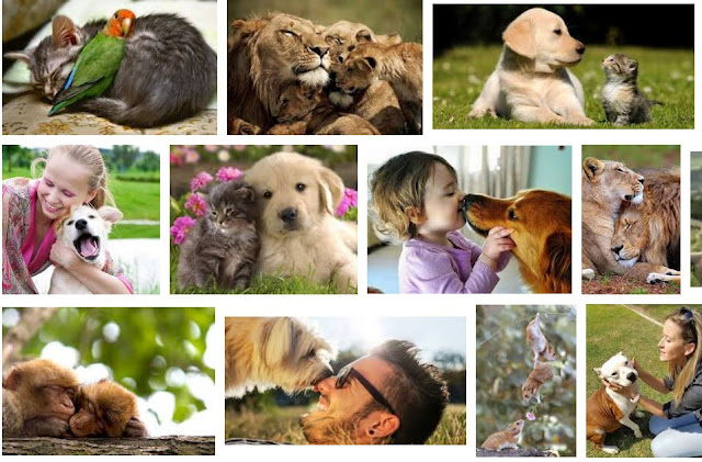 how to explain love of animals unconditional
