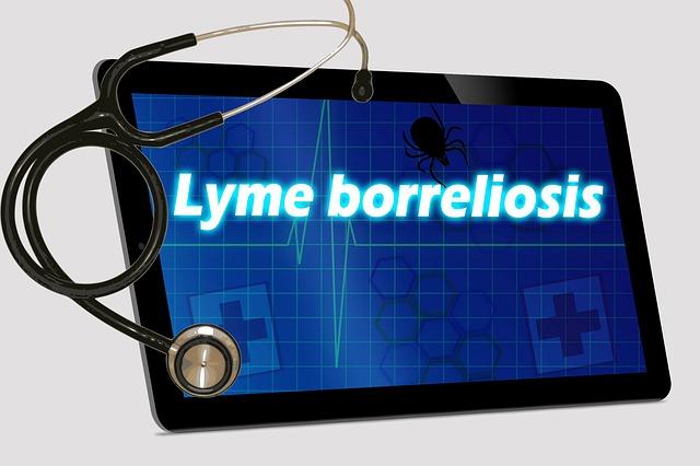 Faktor penyebab penyakit lyme yaitu basil Faktor Penyebab Penyakit Lyme Dan Gejalanya