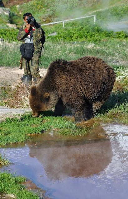 встреча человека +с медведем