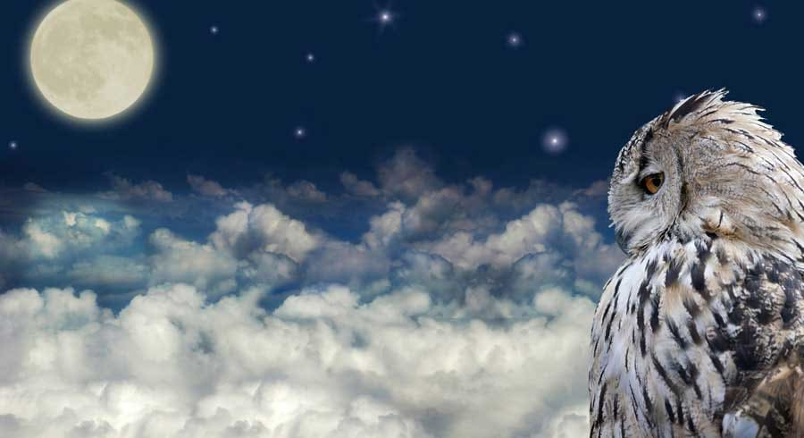 Animales Totem: las almas más puras de la Tierra y cómo vincularse con ellos