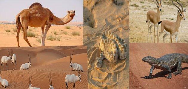 ما تشاهده في الصحراء