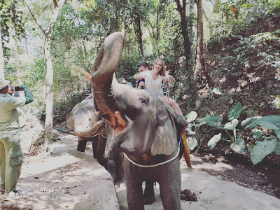 Tempat Wisata Bali Safari Marine Park