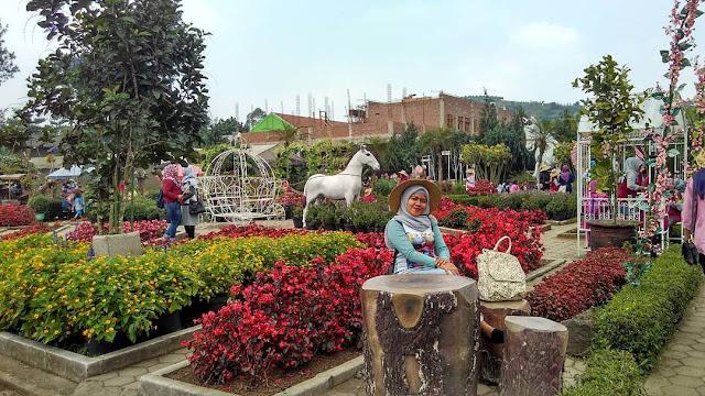 Taman Begonia Kebun Bunga Romantis Di Lembang Bandung