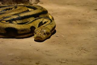Snake - Photo by Bofu Shaw on Unsplash