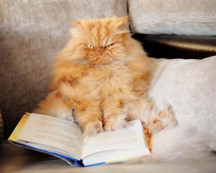 omorfos-kosmos.gr - Γνωρίστε την πιο θυμωμένη γάτα στον κόσμο! (Εικόνες)