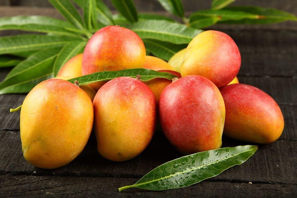 International Mango Festival