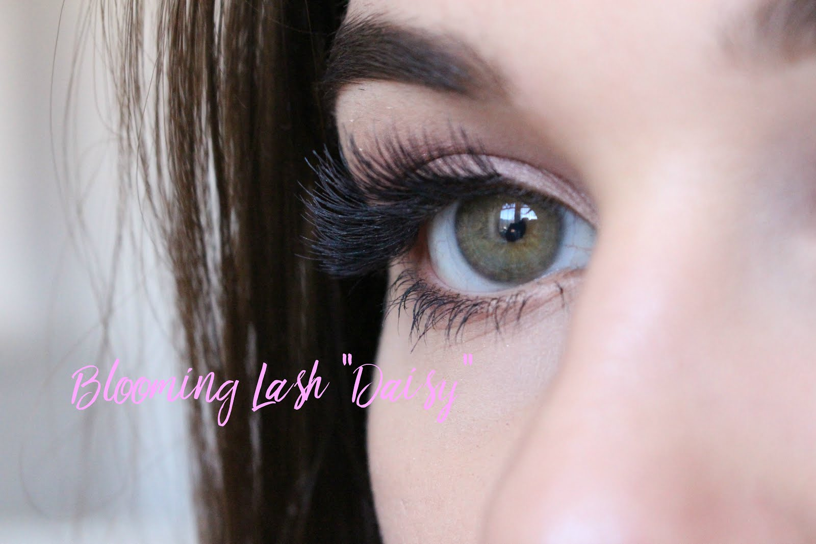 kiss lashes, kiss lashes daisy, kiss lashes müller, günstige wimpern, falsche wimpern günstig, kiss natural flourish blooming lash, kiss natural flourish blooming lash daisy, nelly ray, nelly ray blog