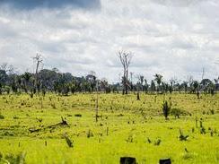 Ações da AGU cobram R$ 555,3 milhões de infratores ambientais