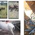 Propriedade Rural de Cajazeiras é invadida e praticamente toda mobília, animais e objetos foram furtados do local