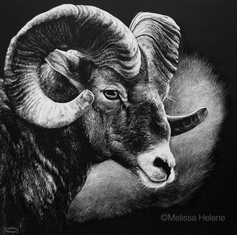 18-Big-Horned-Sheep-Melissa-Helene-Amazing-Expressions-in-Scratchboard-Animal-Portraits-www-designstack-co
