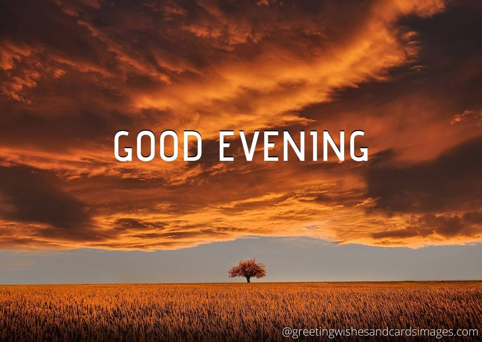 Good Evening 2020 Greeting Wishes And Images