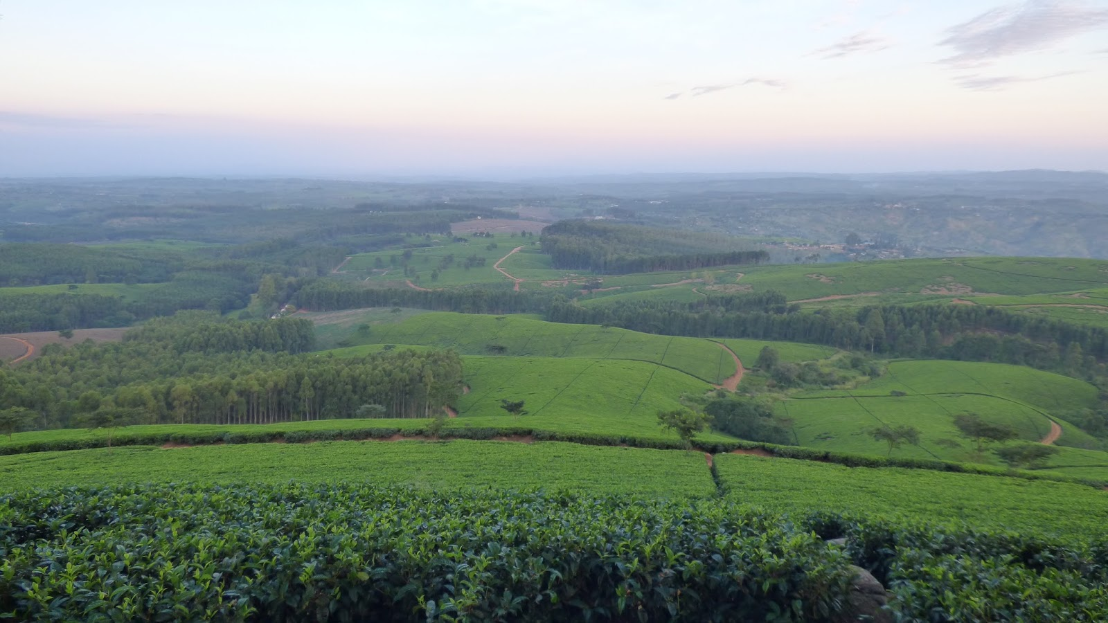 Views from 1200m, looking over the Satemwa Tea Estate, Malawi