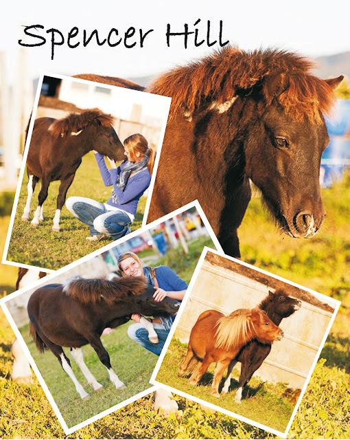 Pferdeblog, Reitsport, Clickertraining