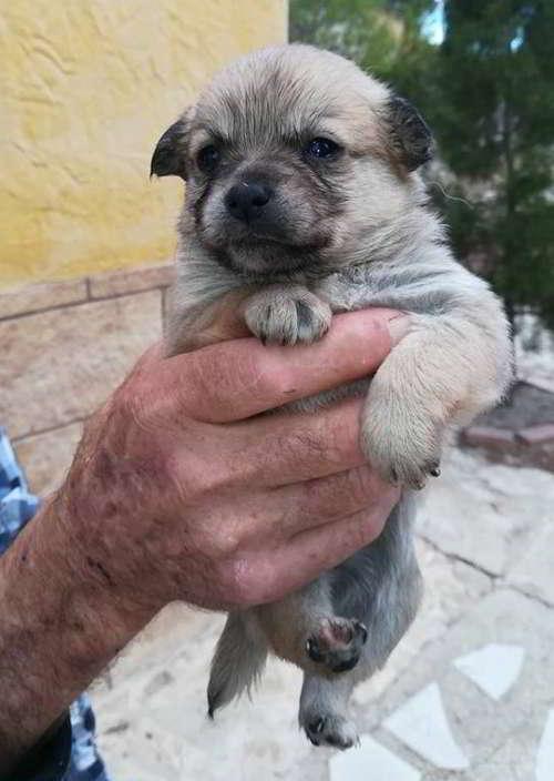cachorros talla pequena 2