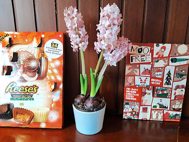 A wooden mantelpiece.  Two Advent calendars sit left and right with pale pink hyacinths in a pot in the centre