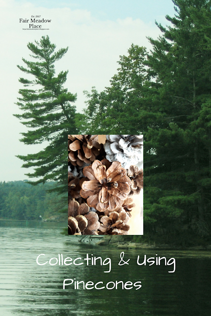 Collecting & Using Pinecones