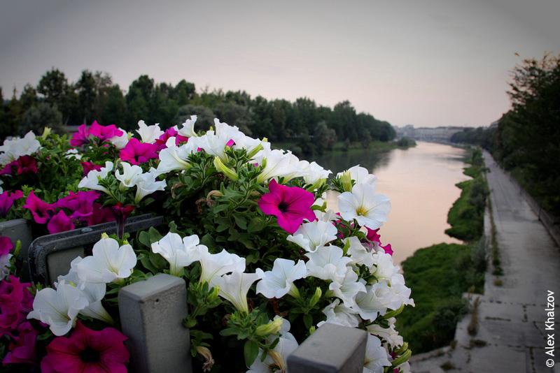 цветы в Турине