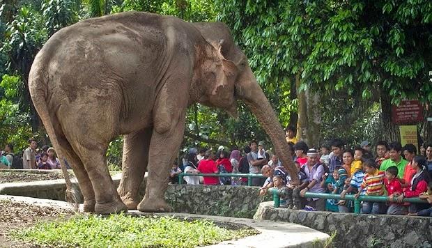 Gajah Ragunan, Jakarta