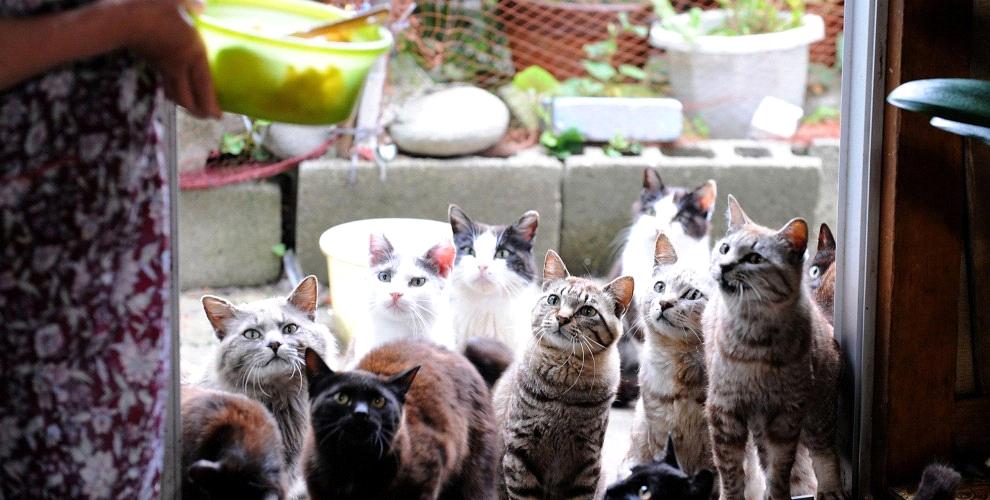 Cats in Cat Island Tashirojima in Japan