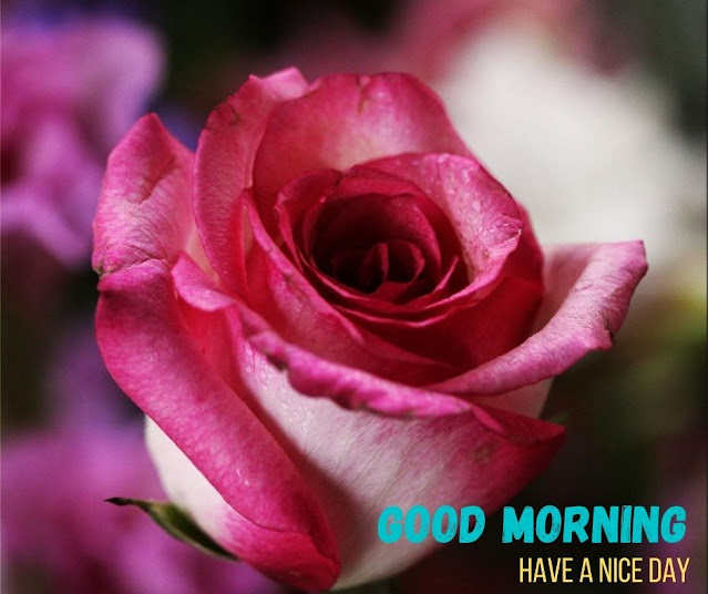 images good morning flowers