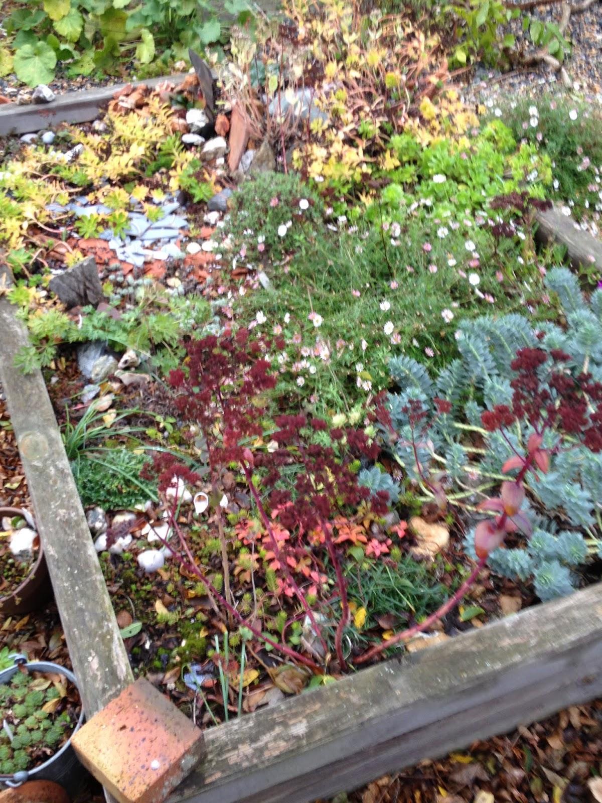 Un Jardin En Ville Je Deteste Le Mois De Novembre Et Pourtant