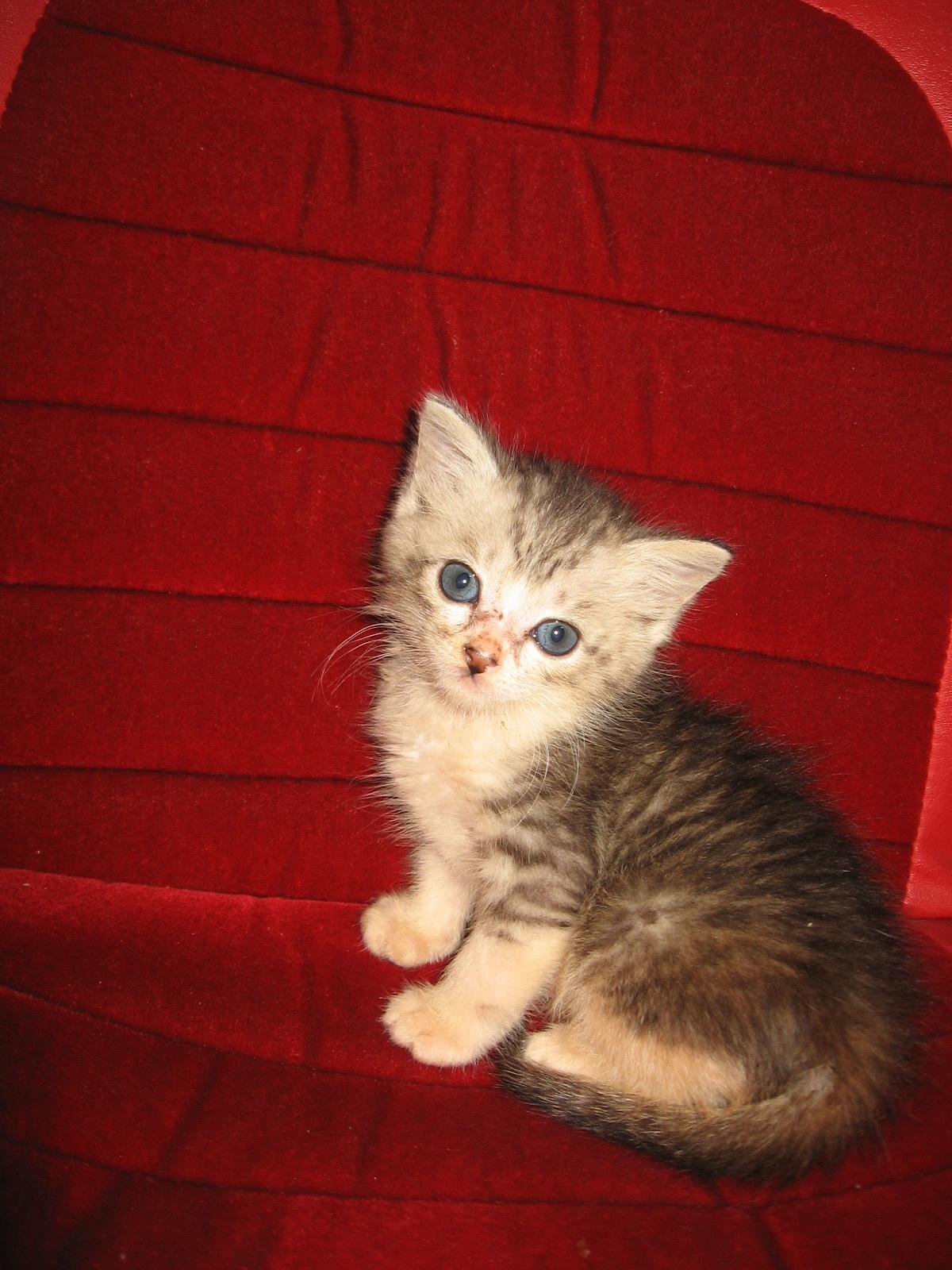 foto de gatinha