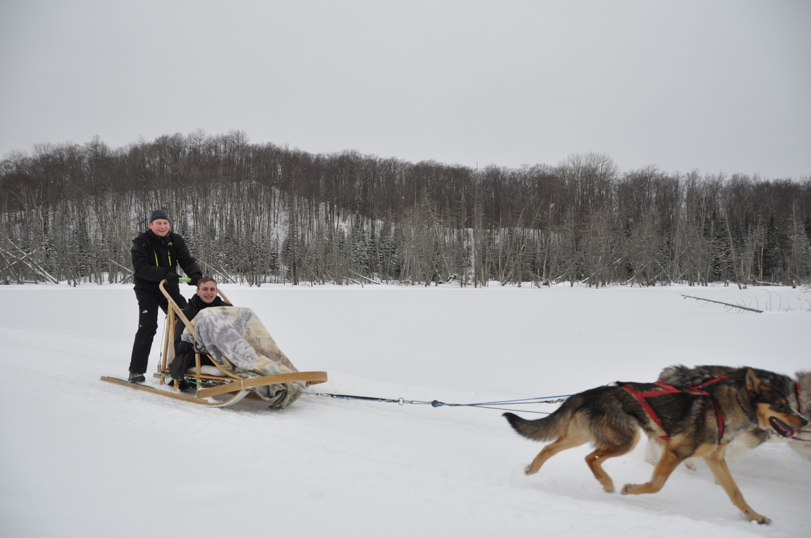 Mathew Hobbis dog sledding in Canada - arctic travel - motherdistracted.co.uk