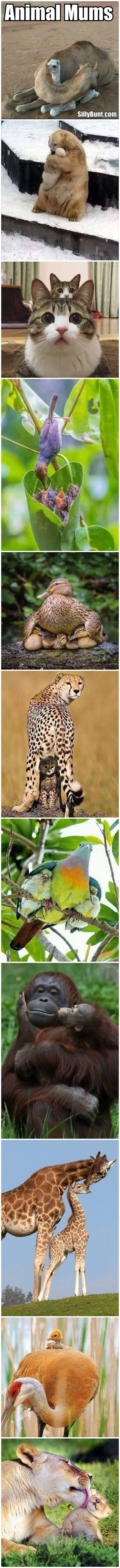 Funny Animal Mums Picture Collection