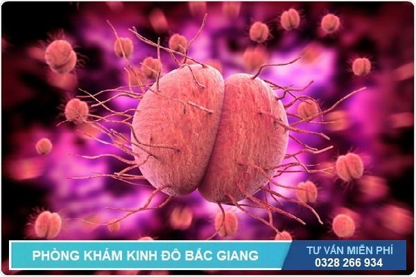Bệnh lậu do vi khuẩn Neisseria gonorrhoeae gây ra