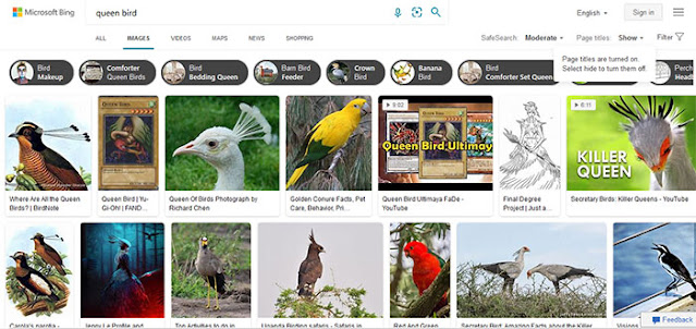 Bing Image Search: Most Popular Images Search Engines: eAskme