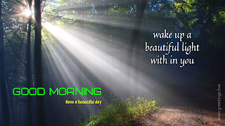 beautiful morning light rays falling on ground through trees. good morning message