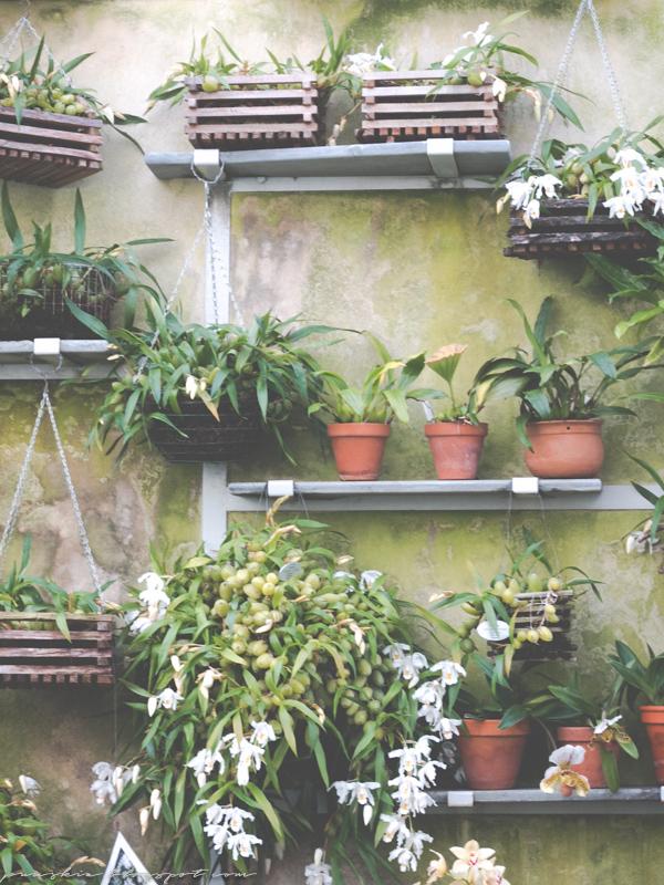 Talvipuutarhassa kukkia seinällä